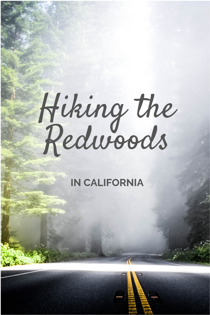 Hiking the Redwood Forests