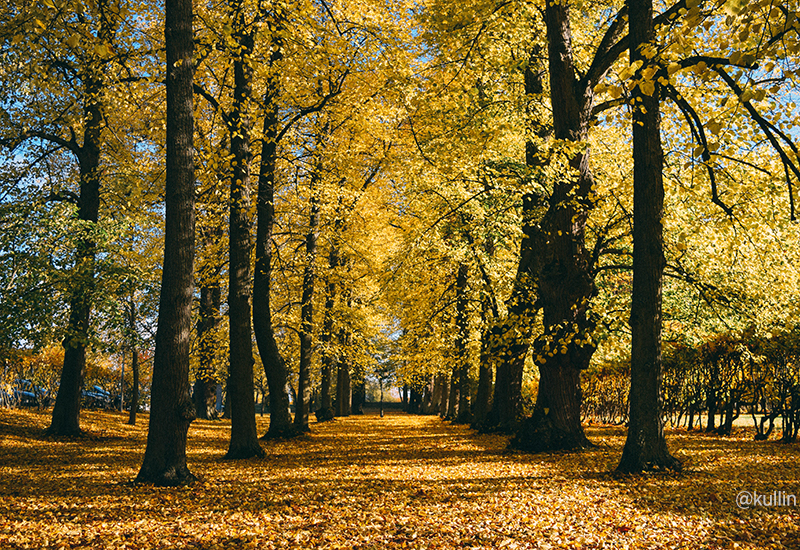 Fall in Näsby Slott park